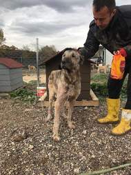 Man petting dog tied up in front of dog house