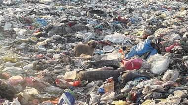 Puppy at landfill in Turkey