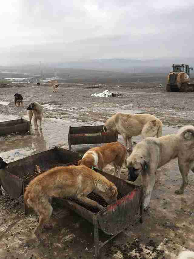 Dog being fed at landfill