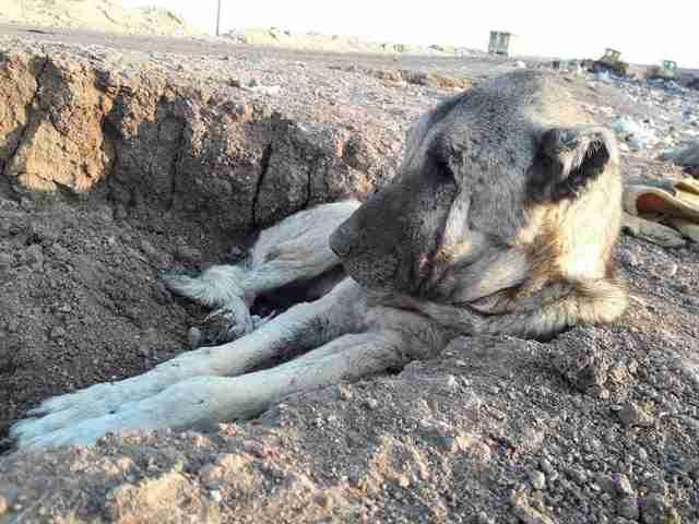 Dog lying in dirt at landfill in Turkey