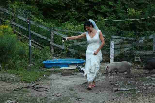 Bride feeding rescued pigs