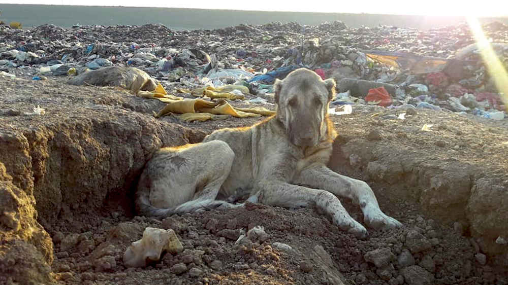 Woman Sees Photo Of Dog Living In Dump — And Knows She Has To Help Him