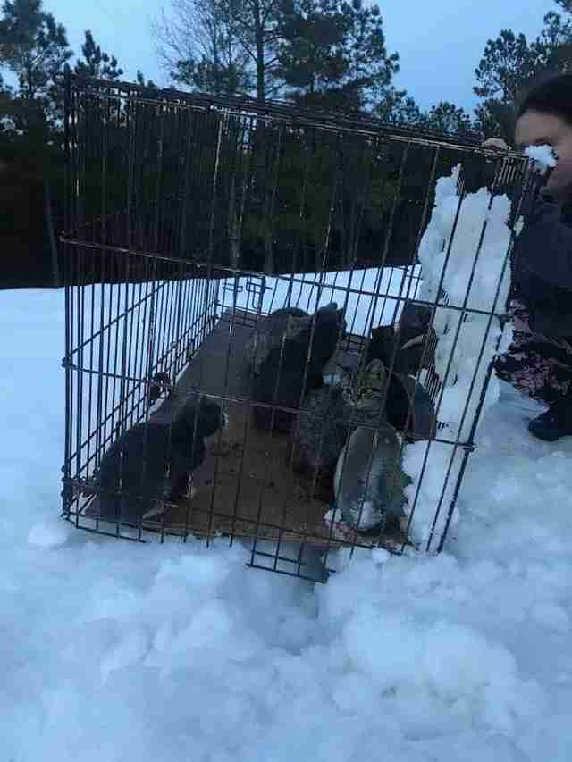 12 cats found in the snow in Campbell County, Virginia