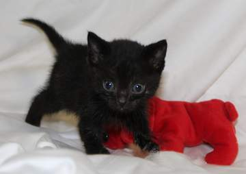 A tiny kitten recuperates after being saved from the snow
