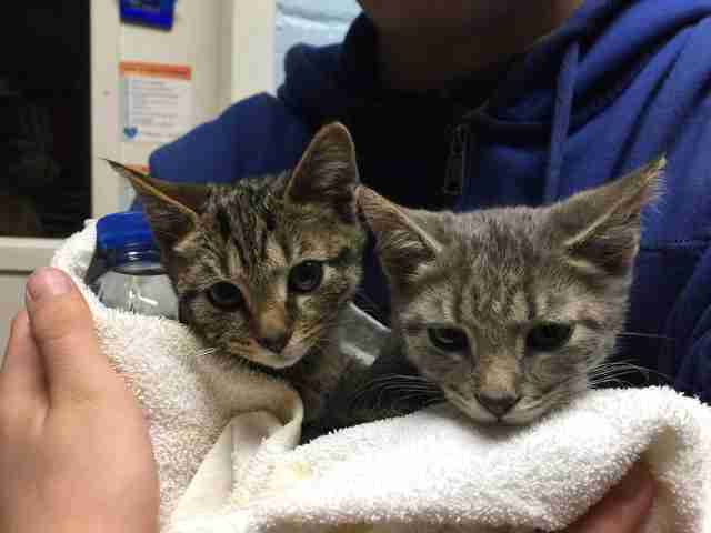 Two frozen cats warm up at a Virginia animal shelter