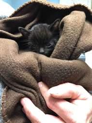 A frozen kitten gets warmed up