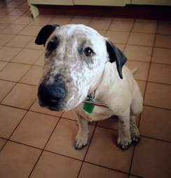 Lola, a shelter dog who had been returned twice, looks for family