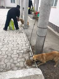 church dogs