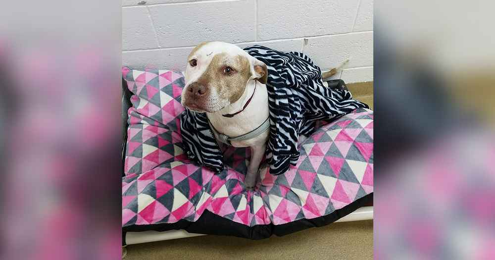 Sweet Shelter Dog Has Been Waiting 7 Years For A Home