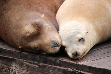 Sea lions lying on dock