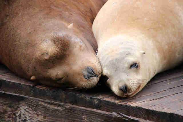 Sea lions lying on dock
