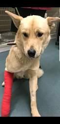 dog hit by car