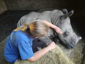 rhino orphanage