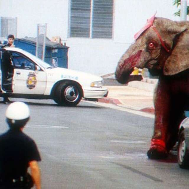 Tyke, escaped circus elephant being chased by police
