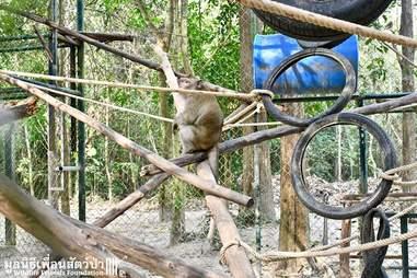 Macaque monkey inside rehabilitation cage