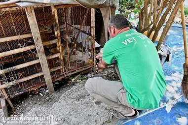 Man reaching into captive monkey's cage