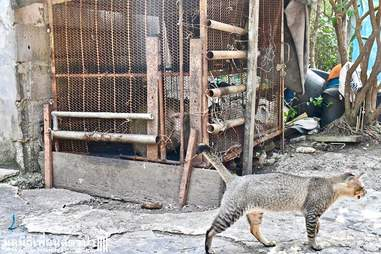 Cat standing in front of monkey's cage