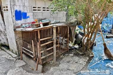 Sad macaque inside rusty metal cage
