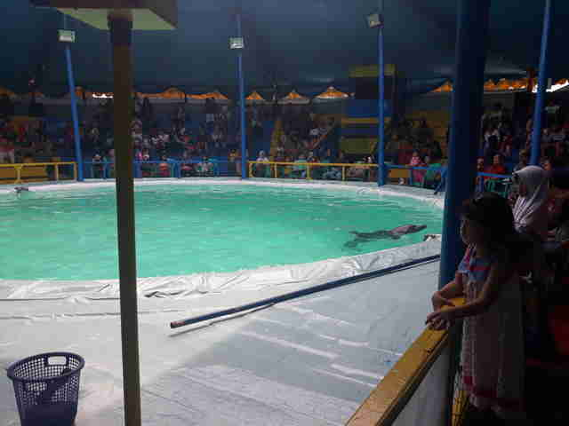 Dolphins performing in traveling circus in Indonesia