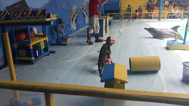 Otters riding bikes in circus performance