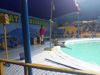 Dolphin on ledge of pool