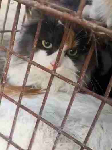 cat rescue china