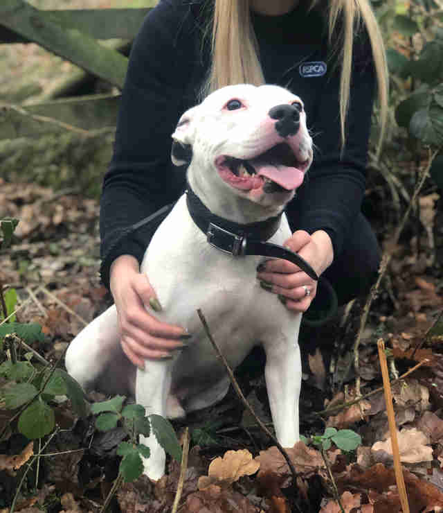 dog rescue snoop england