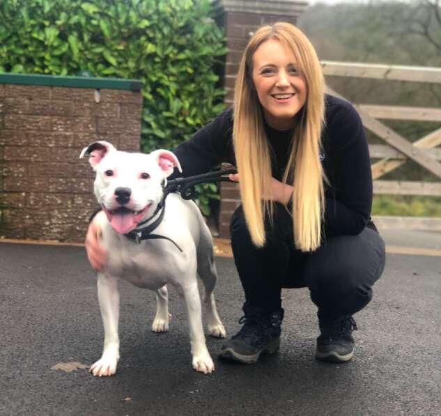 dog rescue snoop uk