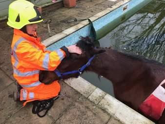 horse stuck in swimming pool