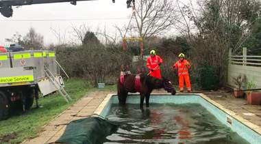 horse stuck in swimming pool