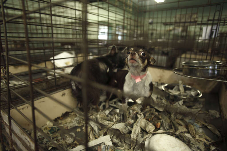 dog rescue puppy mill
