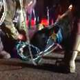 Pregnant cow who jumped from slaughterhouse-bound truck