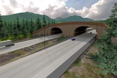 Wildlife bridge is saving animal lives
