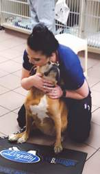 Dog snuggles vet tech after blood draw