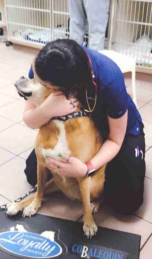 Old dog gets hug at vet office