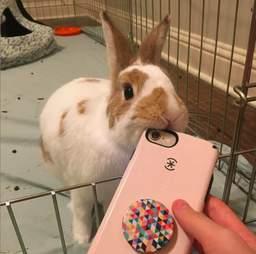 rabbit rescue texas peter