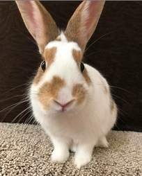 rabbit rescue texas