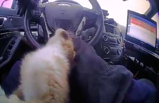 Missouri cop rescuing kitten on highway