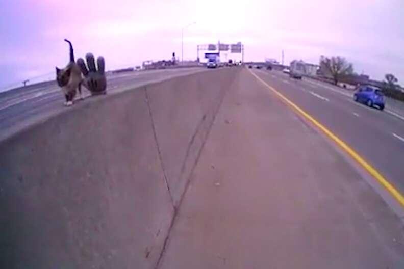 Kitten stranded on highway