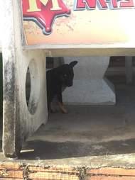 Puppy hiding on street