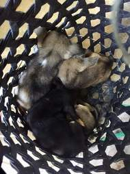 Basket of rescued puppies
