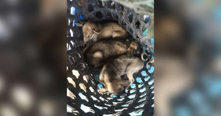 Man Shoves Basket Of Stray Puppies Into Woman's Arms — Then Walks Away