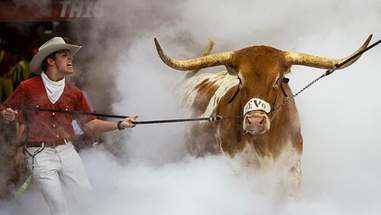 steer texas longhorns