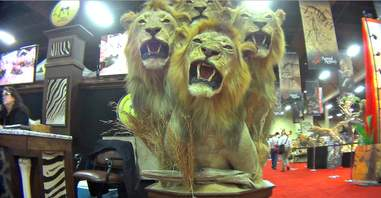 lion trophy hunting