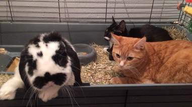 cats and bunny