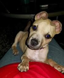 dog rescue cinnamon