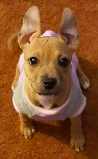 dog rescue cinnamon roll