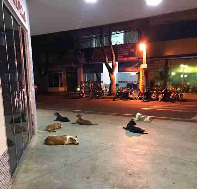 Dogs wait outside hospital in Brazil