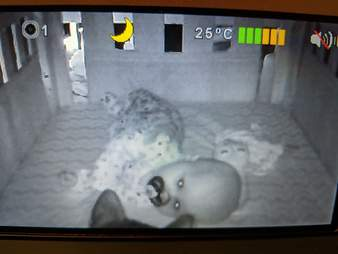 cat appears on baby monitor