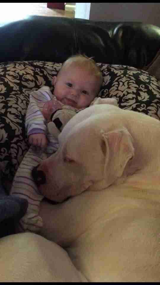 Little Girl Invites Pit Bull To Bed With Her After Scary Earthquake Strikes